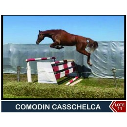 Lote 11: Comodin Casschelca