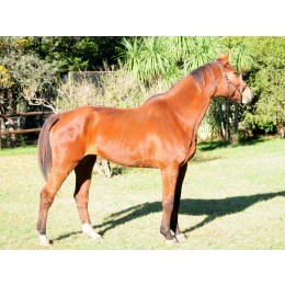 LOTE 9: DOÑA D´HELBY Z