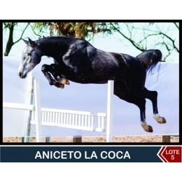 Lote 5: Aniceto La Coca
