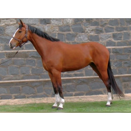 Lote 4: REMONTA EDELWEISS