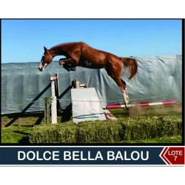 Lote 7: Dolce Bella Balou