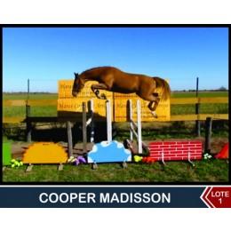 Lote 1:  Cooper Madisson
