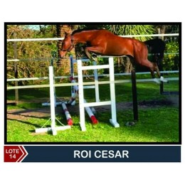Lote 14: Roy Cesar
