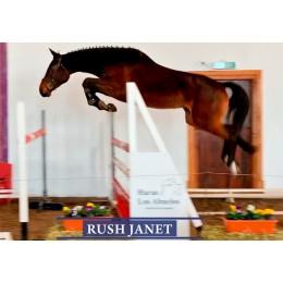 Lote 1: Rush Janet