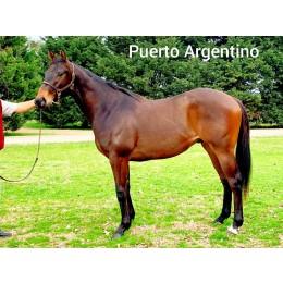 Lote 5: PUERTO ARGENTINO