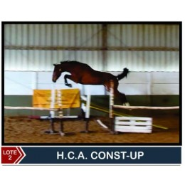 Lote 2: H.C.A Const-Up