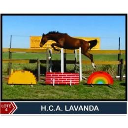 Lote 4: H.C.A Lavanda