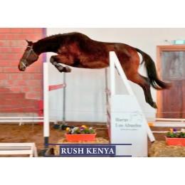 Lote 6: Rush Kenya