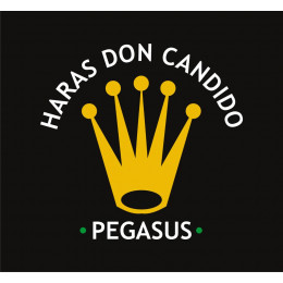 Remate Haras Don Candido 2021