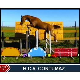 Lote 4: H.C.A: Contumaz