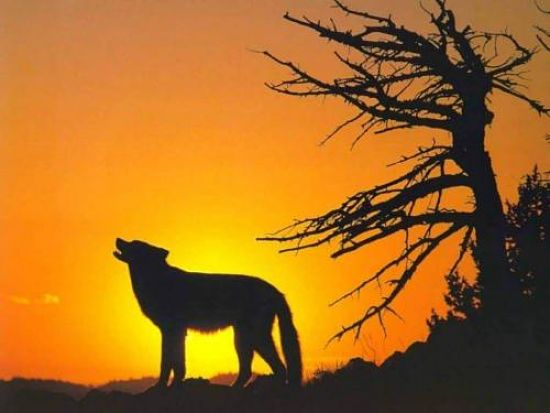 lonewolf_disrupt
