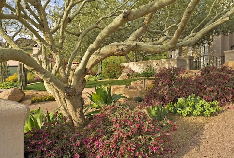 Desert landscaping dann foley interior design american for Palm springs landscape design