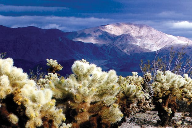5 Palm Springs Amazing Desert Hikes