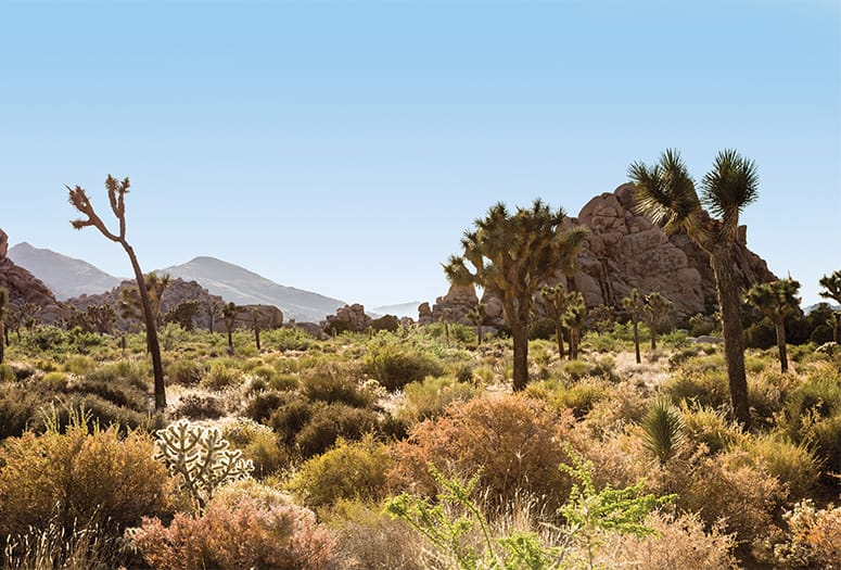 Travel Guide to the Desert: 9 Resort Cities With Distinctive Flair