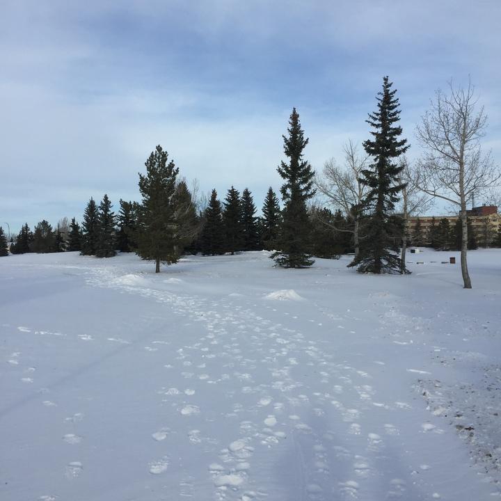 Snowy tundras (not really)