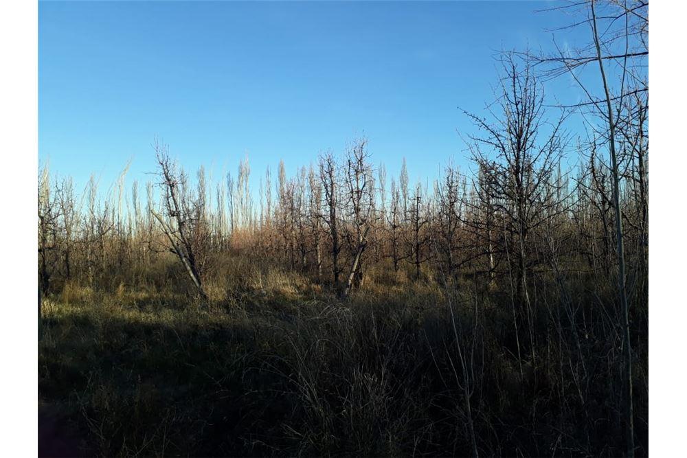 Campo en Venta en General Roca Rio Negro