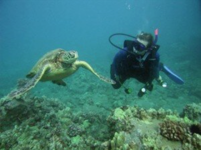 Corinna Bellizzi Scuba Diving and Swimming With A Sea Turtle on Maui, Hawaii
