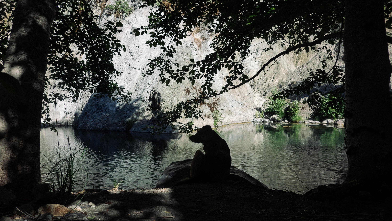 a dog sitting by a creek pool