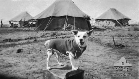 Horrie the war Dog ww2