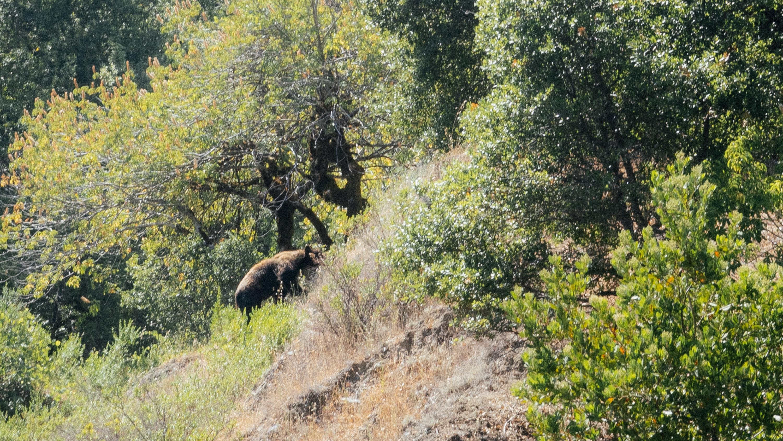 a black bear walking up a hillside