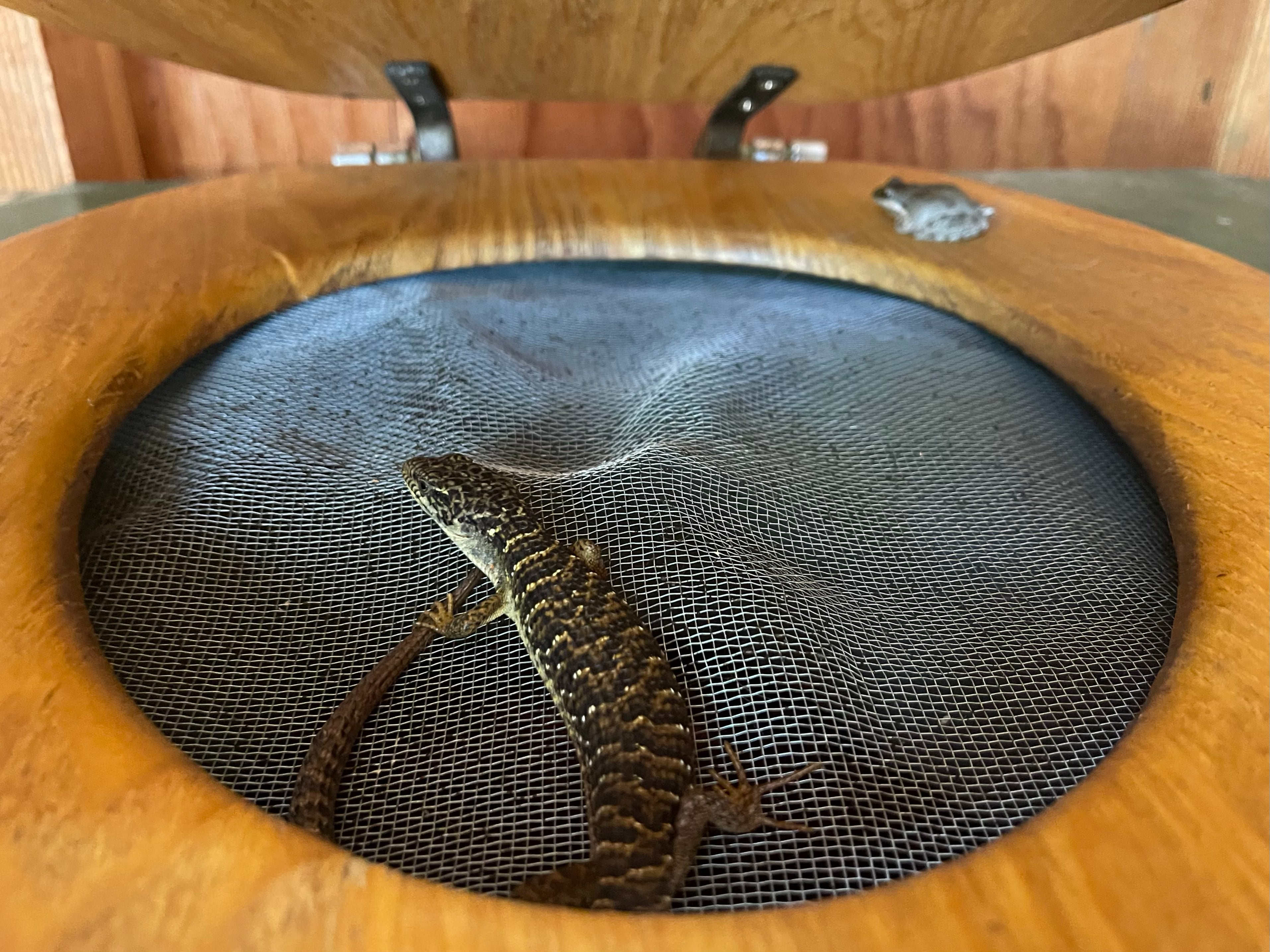 a lizard and a frog sitting on the seat of a commode
