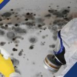 Moisture & Mold: Preventing and Removing