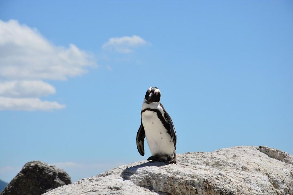 Review-Weekly_Blog_Amazon-Echo-Dad-Jokes_Penguin