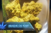 Cannabis Up Close #3: Abusive OG Kush Strain (Indica)