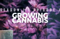 From Clones to Curing: A Beginner's Journey in Cultivating Cannabis #1 – Planning/ Set Up