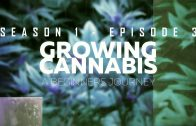 From Clones to Curing: A Beginner's Journey in Cultivating Cannabis #3 – Vegetation Stage