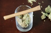 How to Roll a Marijuana Blunt in Less than 1 Minute