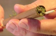 How to Roll A Wax Blunt Rolled with a Stick for Air Flow Hole