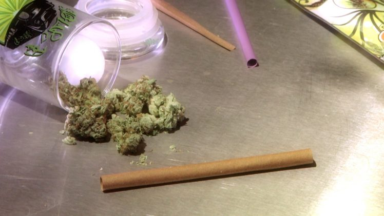 How to Roll Cannabis With a Blunt Wrap Marijuana Tips & Tricks: Cannabasics #1