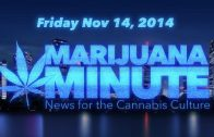 Marijuana Minute, Nov 14 2014: Marijuana Protects from Traumatic Injuries, Shrinks Brains