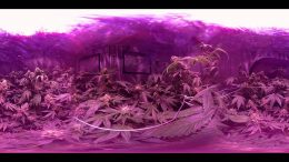 VR 360° Cannabis Grow Room Tour (Flowering Week 6) Gorilla Grow Tent/KIND Led Light