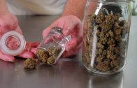 How To Properly Store Cannabis (Preserve flavor, texture & Potency): Cannabasics #63
