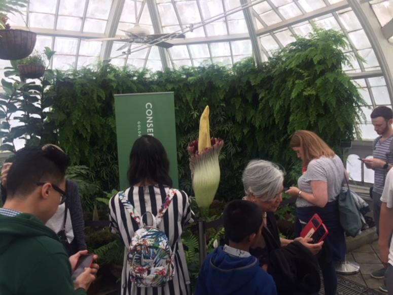 Crowd gathers in front of Suma the Titan at the San Francisco Conservatory of Flowers