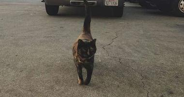 Authorities removed Edna, a cat, from a San Francisco firehouse after receiving a health and safety complaint.