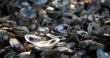 Tomales Bay Oyster Ban Lifted By Health Officials