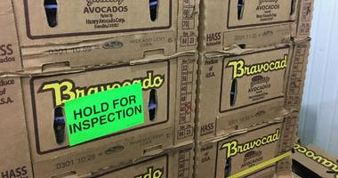 Recalled Avocados