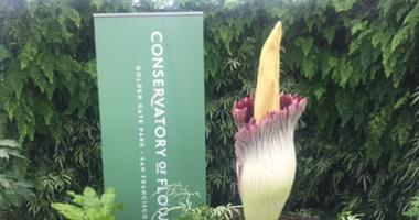 SF Conservatory of Flowers corpse flower