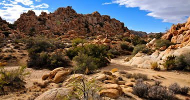 Joshua Tree National Park in Southern California.
