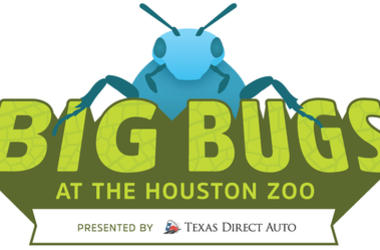 Come to the Houston Zoo this summer to learn about bugs!