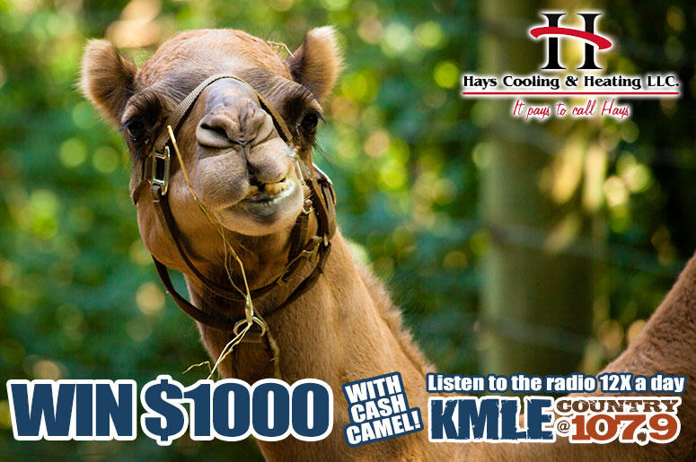 Win $1000 with Cash Camel!