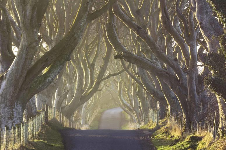 Dark Hedges road Northern Ireland