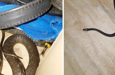 Crafty Snake Spotted Hiding In Pile Of Belts
