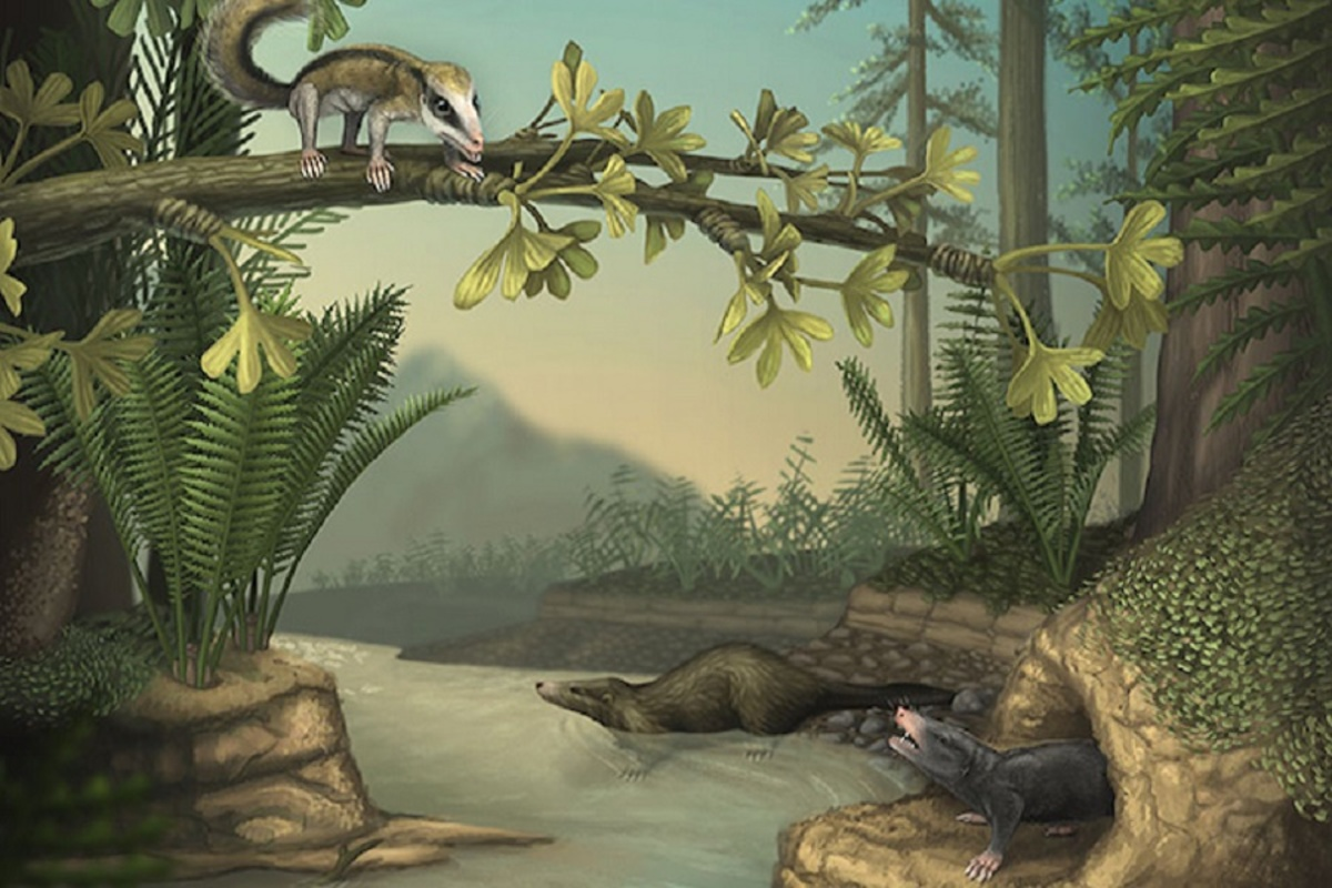 Agilodocodon scansorius, Docofossor brachydactylus, and Castorocauda