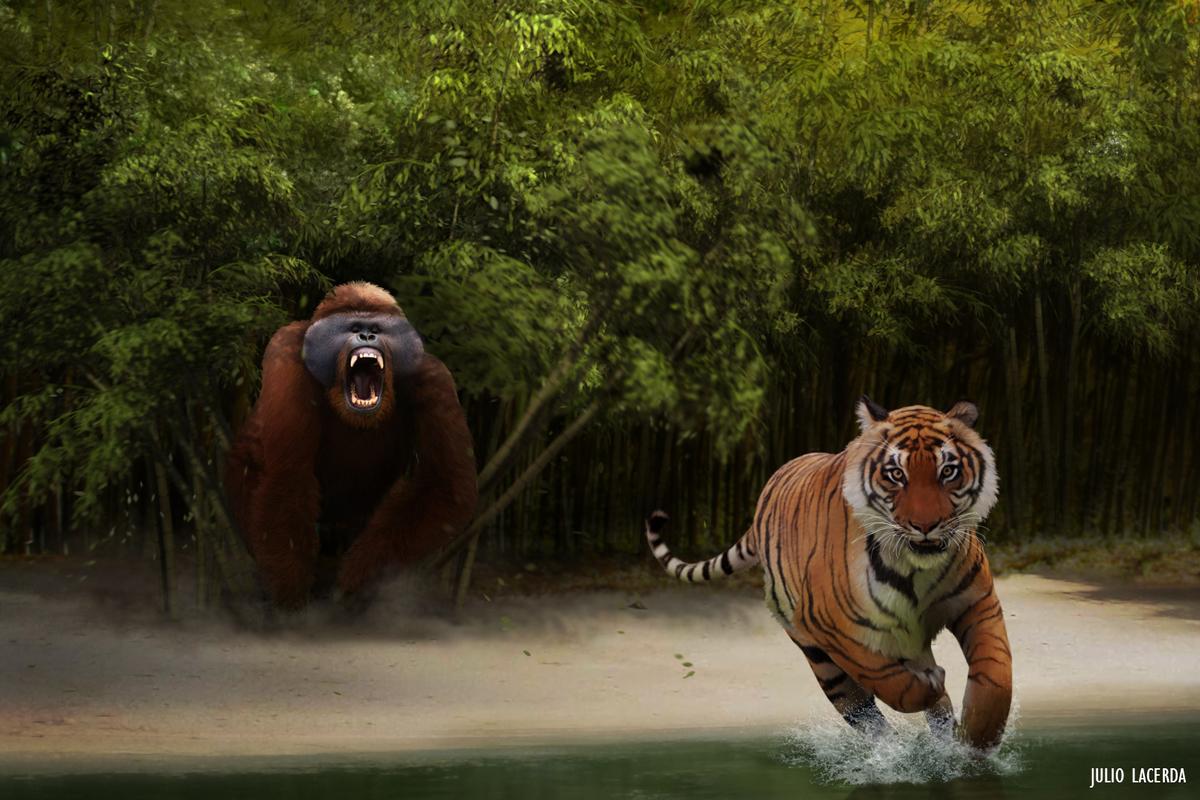Gigantopithecus versus tiger