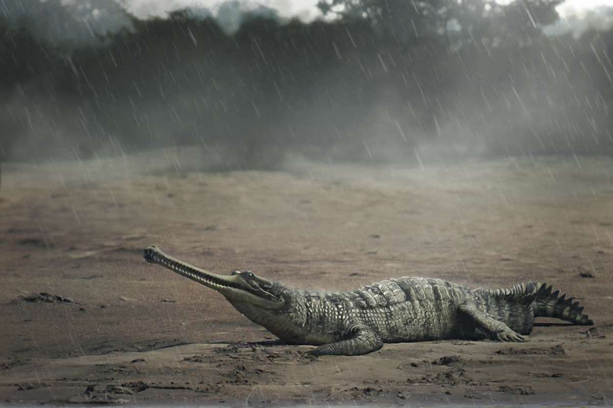 573b9df63 Crocodile fossils reveal parallel evolution in India