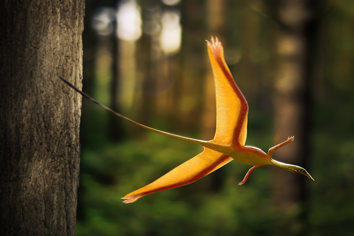 Sharovipteryx on a glide